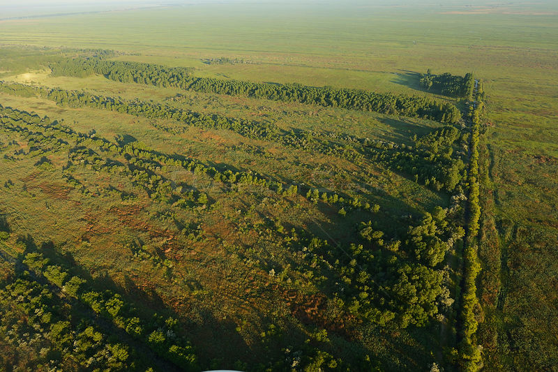 Aerial view over the Danube delta, showing some forest regrowth in Danube delta rewilding area, Romania, June 2012