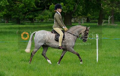 Class 41 - BSPS RIHS Pony of Show Hunter Type <=122cms photos