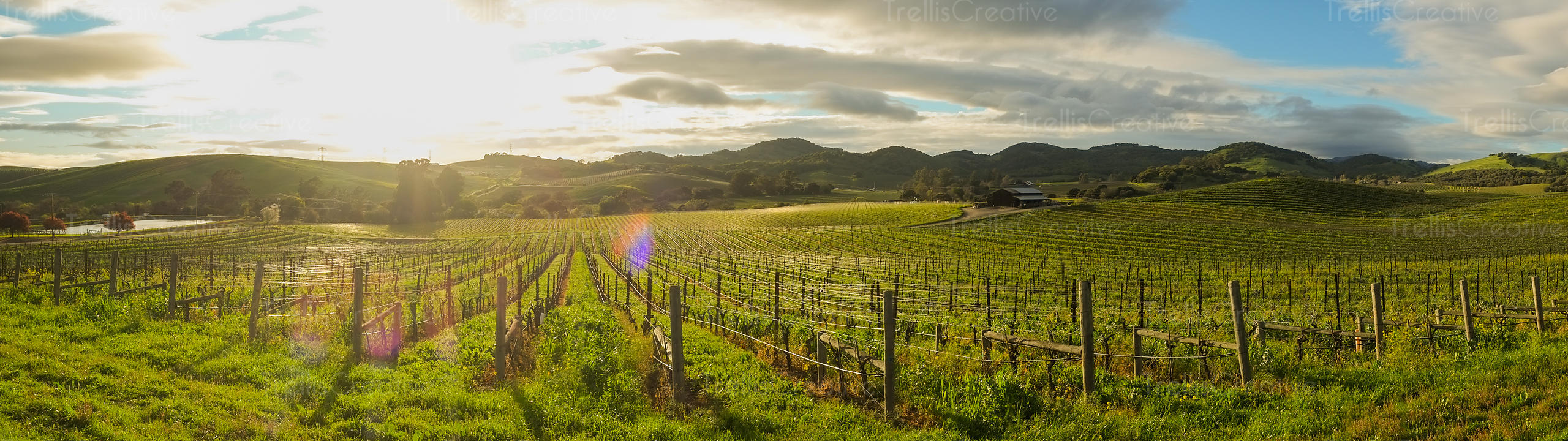 Panoramic shot of vineyards against a cloudy sky with sunlight filtering through