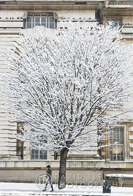 Winter Tree London