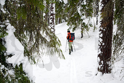 Skier in the old forest of Multiharju