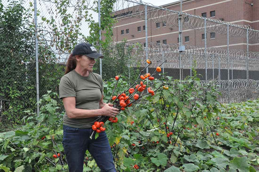 Program Coordinator Tina Bentley at Cook County Jail Garden