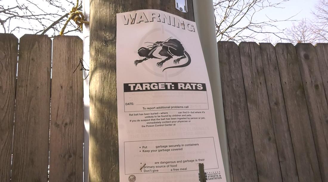 A rat warning sign