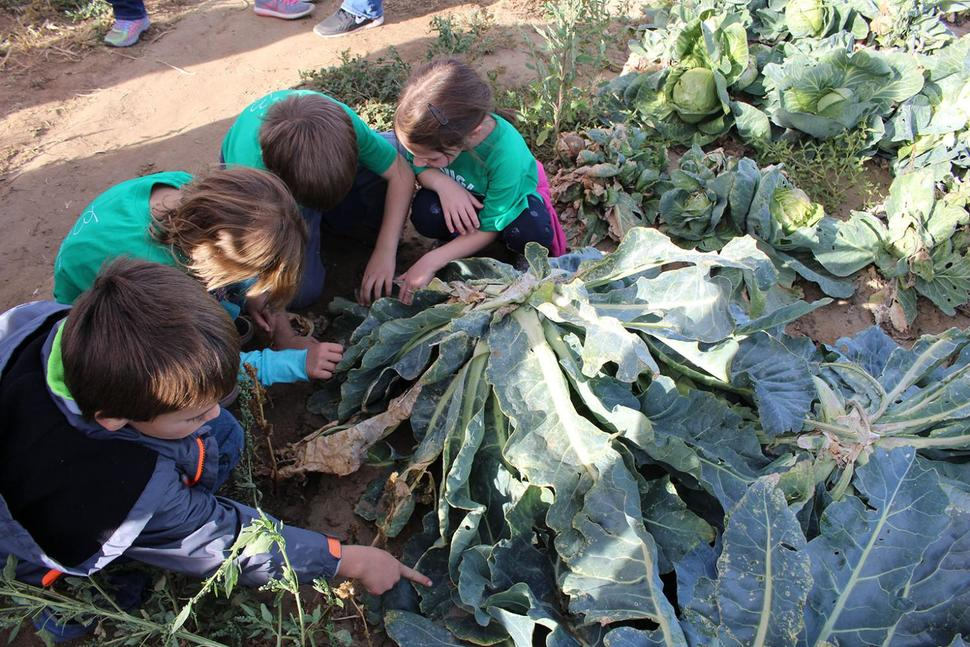 Supporting sustainability with farm-to-school programs