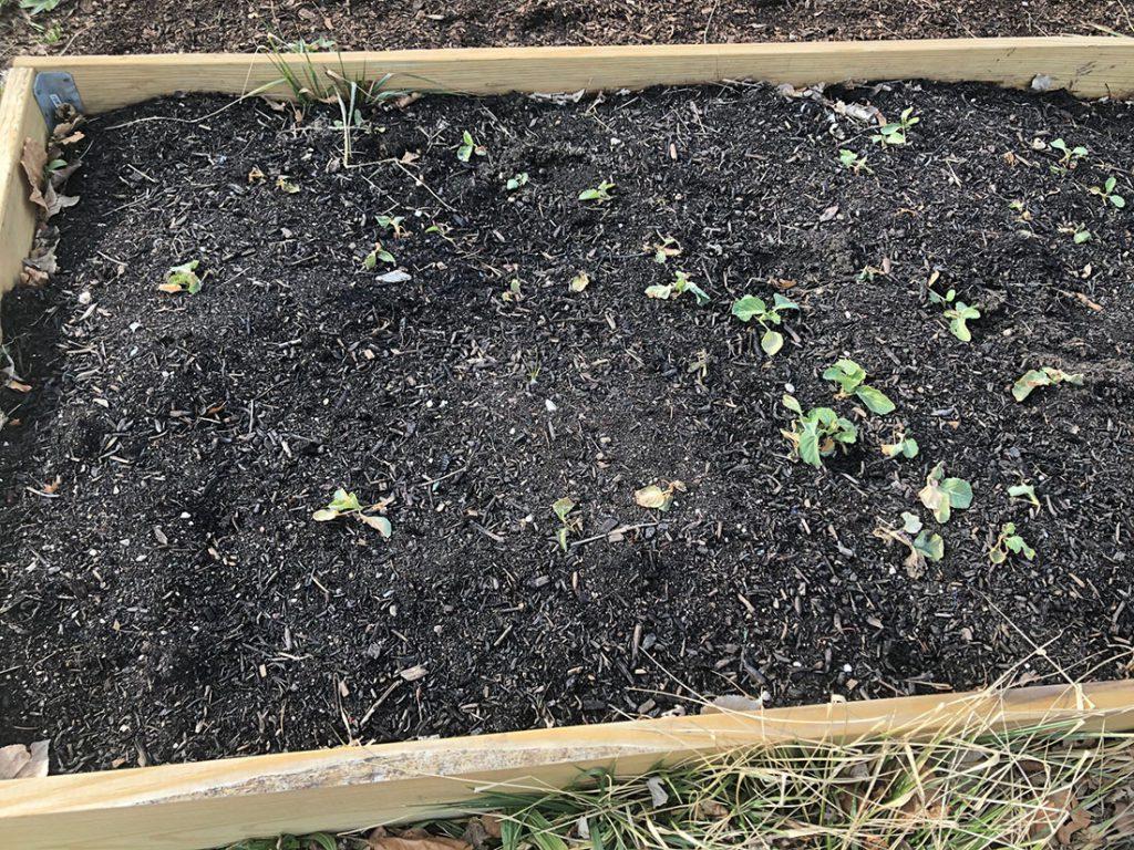 organic, dirt, ground,