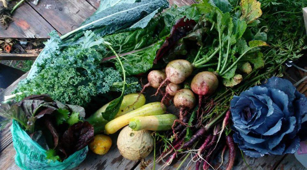 food, produce, organic, garden