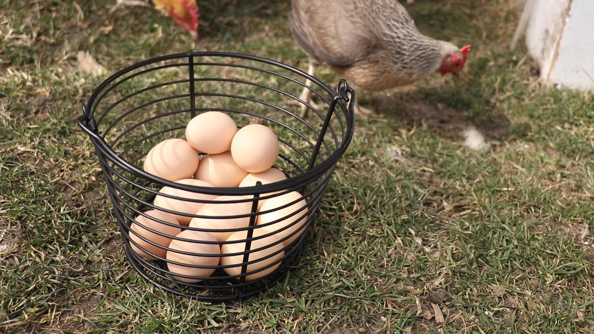 Fresh-picked eggs