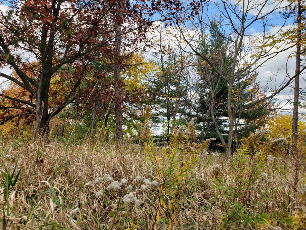 Trees and other plants in Illinois
