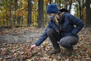 Kristin Pink, an ecologist for the Cook County Forest Preserve, reaches for oak leaves on the ground in Spears Woods.