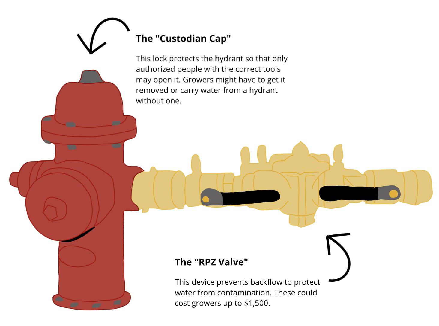 A graphic — a custodian cap on top of a fire hydrant can prevent growers from accessing it. The RPZ valve, required under the hydrant permit policy, is a device meant to prevent backflow and protect water from contamination. This, including installation and other costs, could carry a $1,500 price tag.