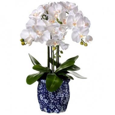 Orquídea Blanca En Maceta Azul Regency