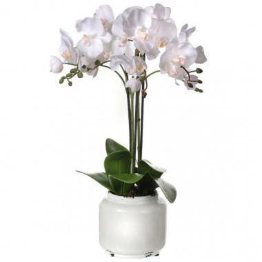 Orquídea Blanca En Maceta Blanca Regency