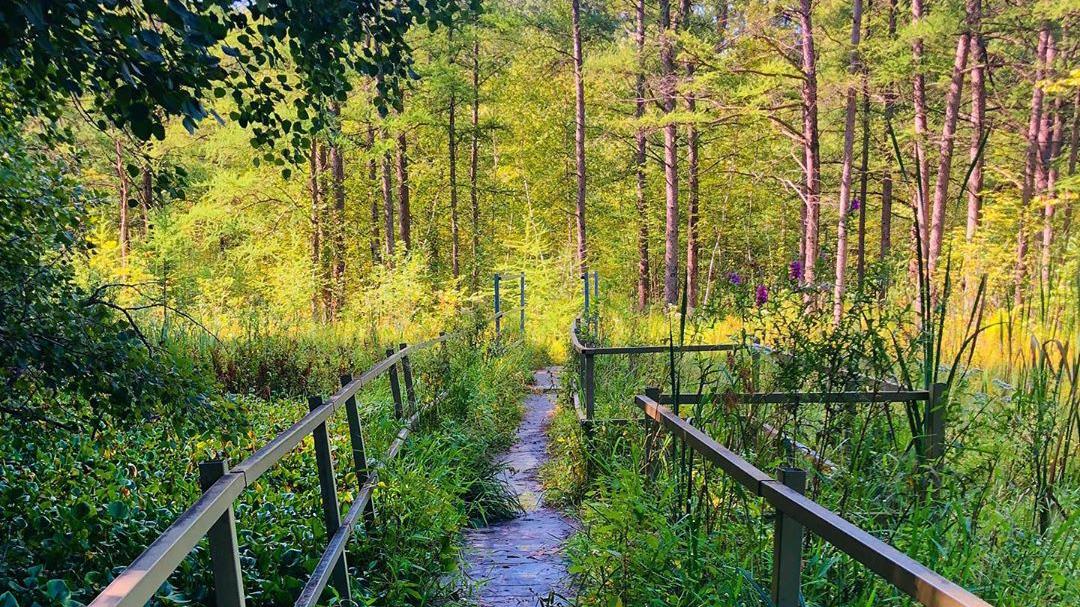 theodore wirth parkway hiking