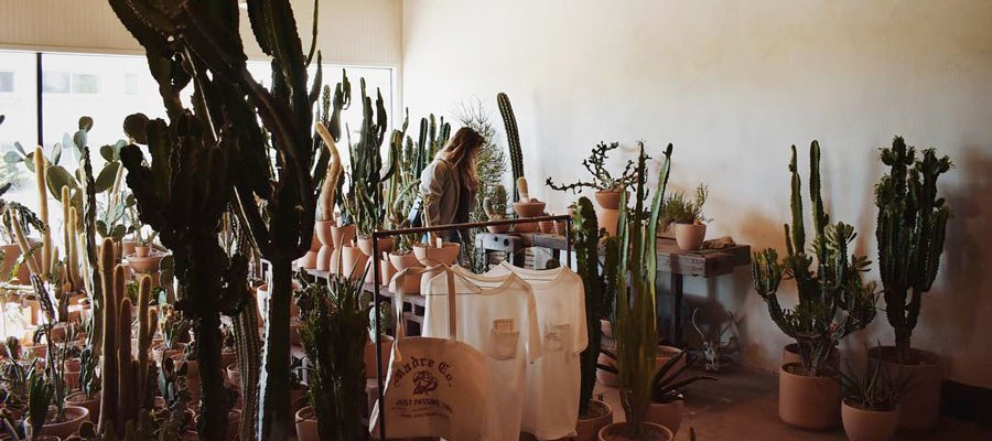 person shopping at madre cacti