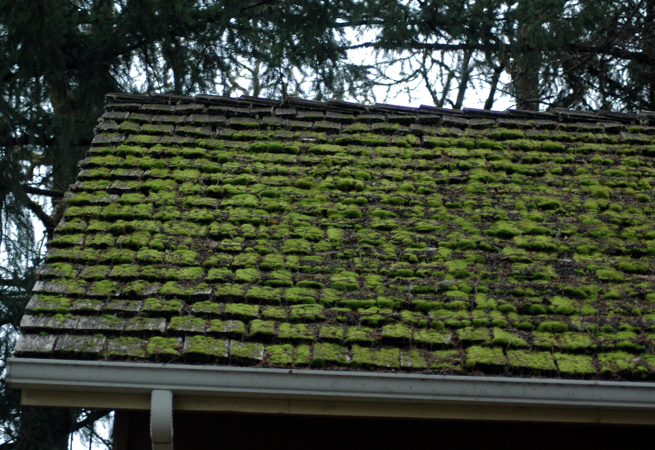 Quot Inspecting Wood Shingle And Shake Roofs Quot Online Video