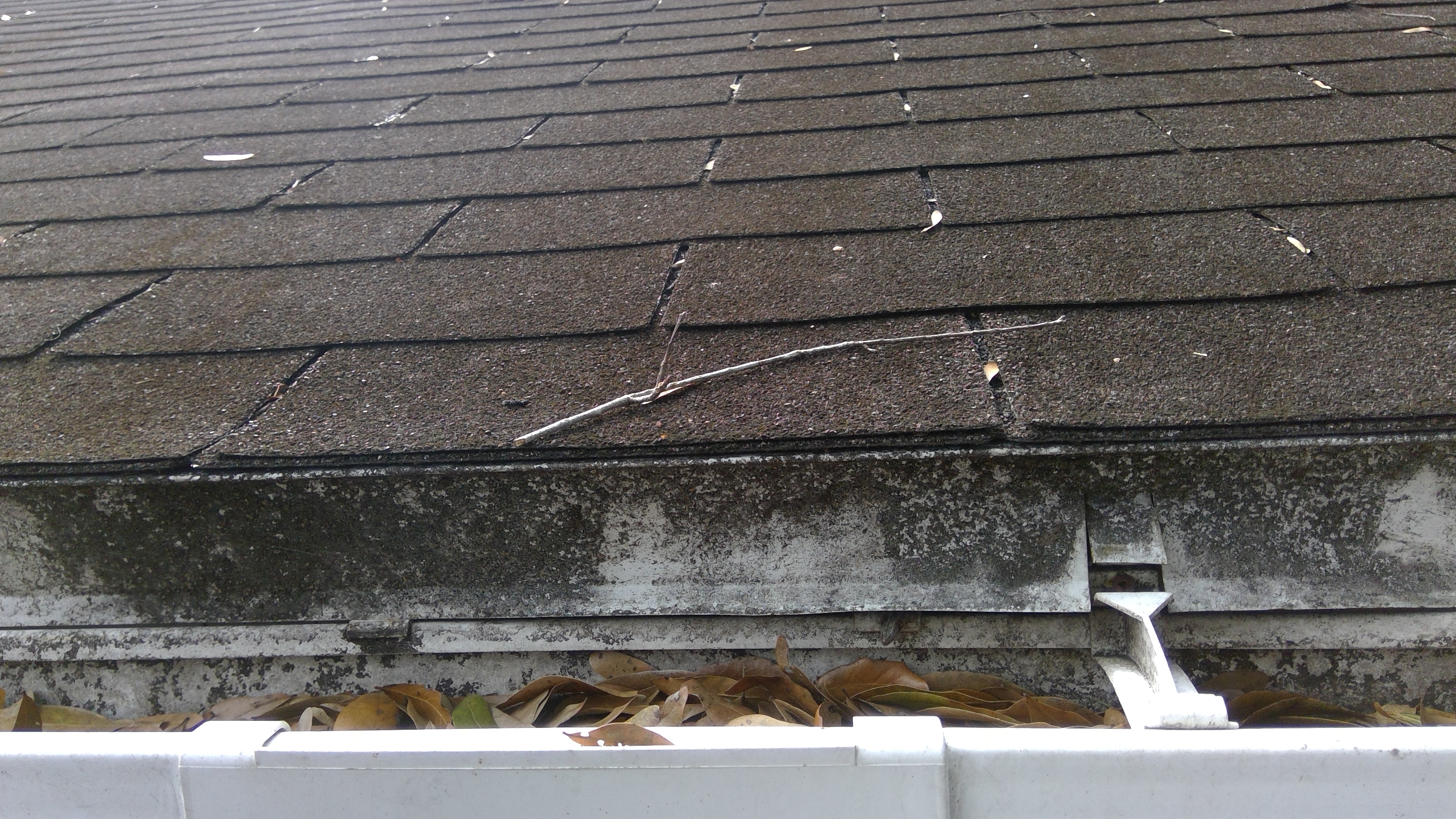 How to perform roof inspections course page 829 internachi roofing material aggregate seems to be collecting at bottom of gutter which could show some possible wear to the shingles may want to have a professional sciox Image collections