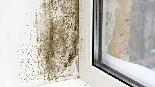 """""""How To Perform Mold Inspections"""" online video course"""