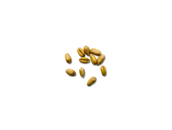 Assortment of wheat kernels
