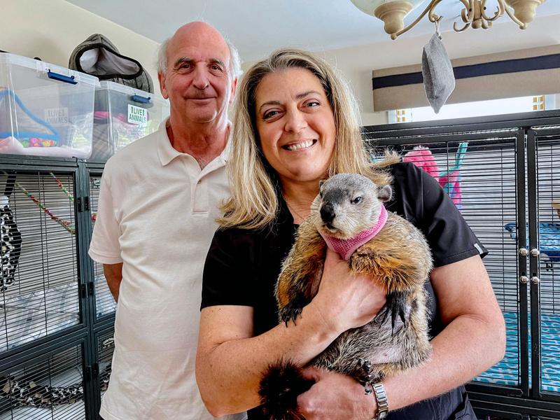 SCORE Success Story: Acorn Acres Wildlife Rehabilitation