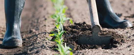 Legacy Planning for Farmers