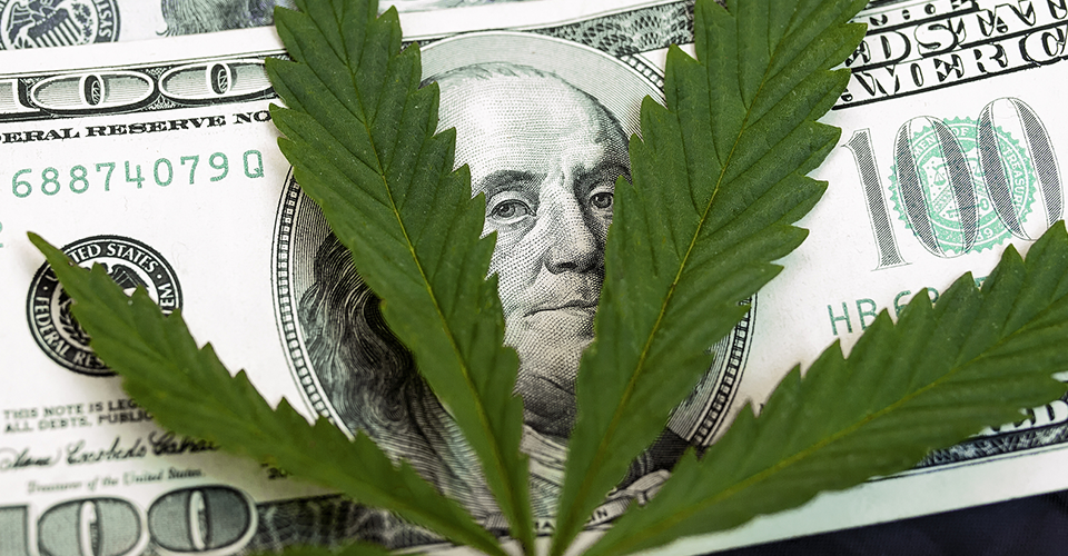 The Marijuana Business