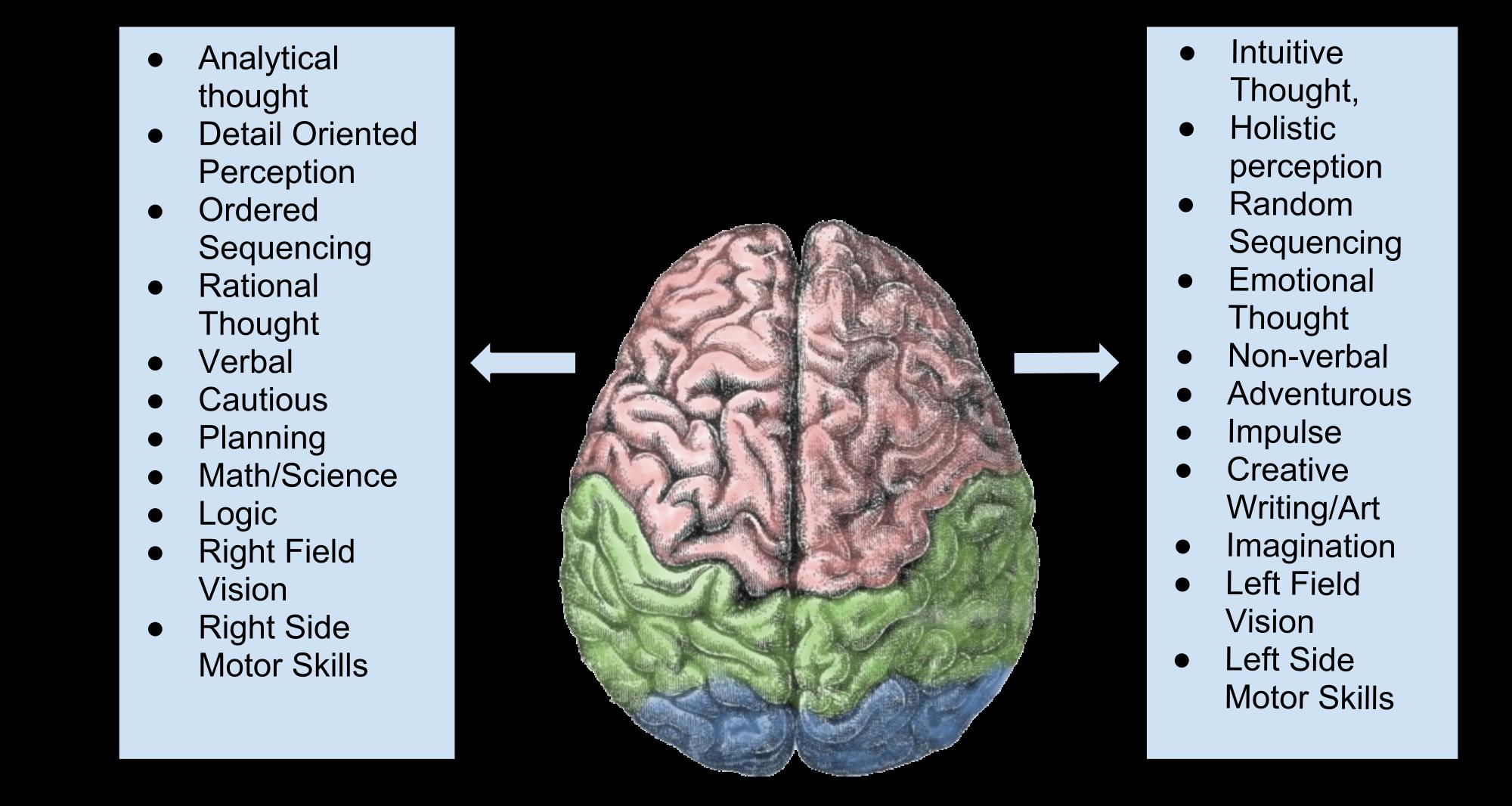 Right brain vs Left brain functions