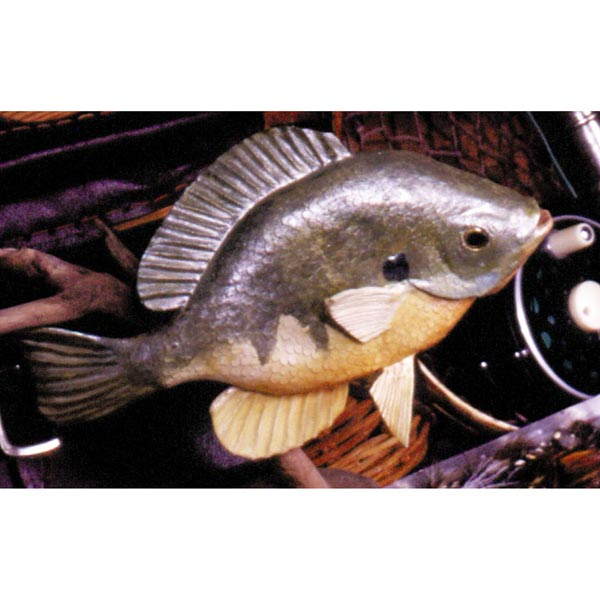 Basswood Bluegill