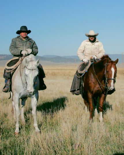 Meyer cowboys moving the cattle by horseback