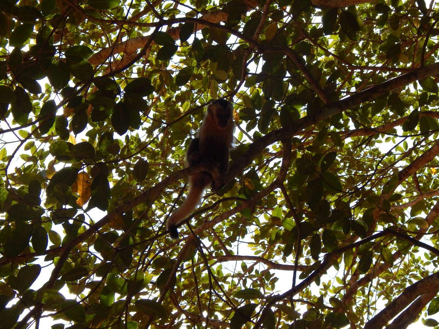 Bom Jardim, próximo ao Manso, lindo lugar com macacos e peixes em águas cristalinas