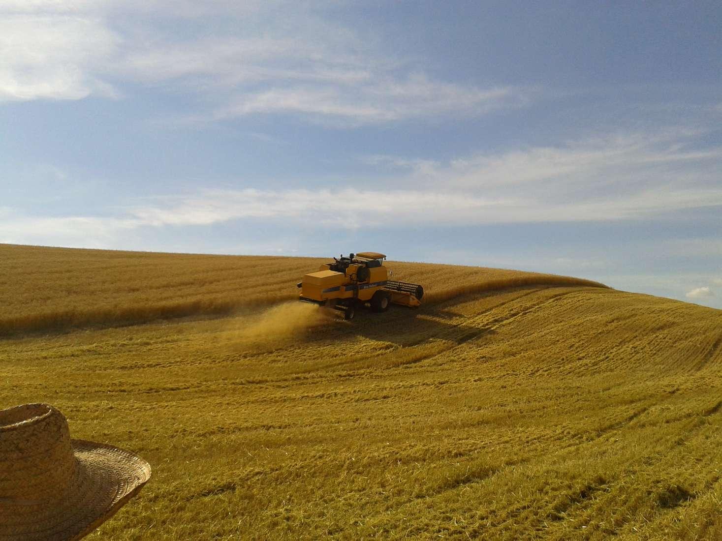 Eu e meu Pai Gilberto Piaia olhando a colheita de trigo 2014