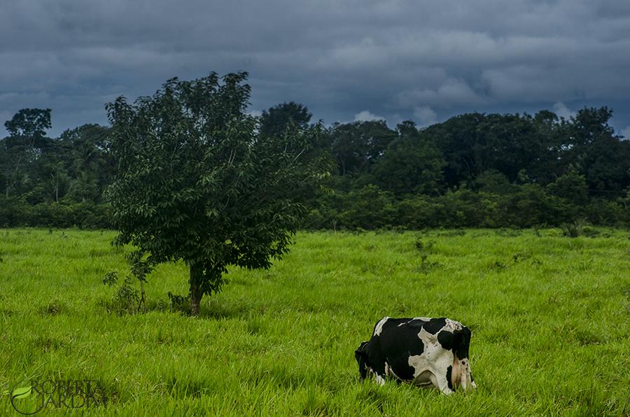Fotografia rural um momento de paz.Contatos para fotografar seu plantel com todo carinho. Roberta Jardim - Fotografa rural