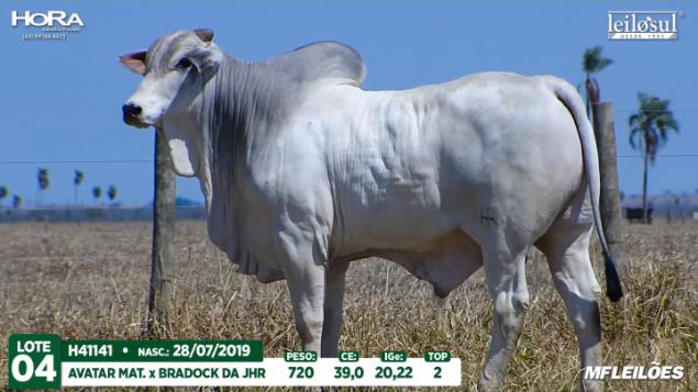 LOTE 04 - H41141 - PESO:  KG 720 - CE 39 CM TOP 2% - NASC: 28/07/2019