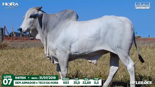 LOTE 07 - H41194 - PESO: 663 KG - CE 35 CM TOP 0,5% - NASC: 31/07/2019