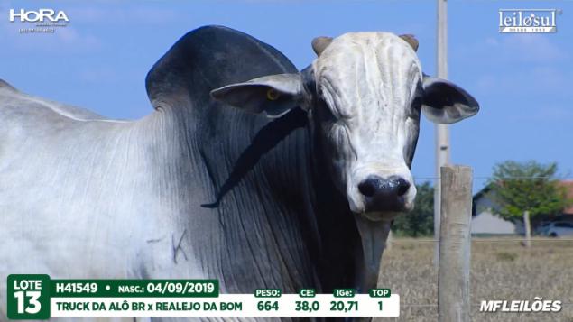 LOTE 13 - H41549 - PESO: 664 KG - CE 38 CM TOP 1% - NASC: 04/09/2019