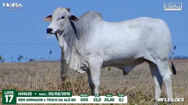 LOTE 17 - H41620 - PESO: 600 KG - CE 33 CM TOP 0,1% - NASC: 05/09/2019