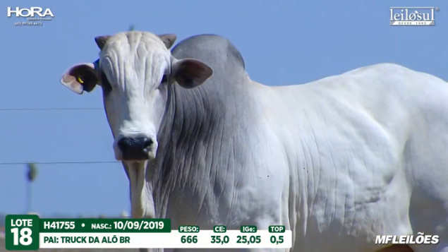 LOTE 18 - H41755  - PESO: 666 KG - CE 35 CM TOP 0,5% - NASC: 10/09/2019