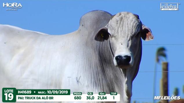 LOTE 19 - H41689 - PESO:  680 KG - CE 36 CM TOP 1% - NASC: 10/09/2019
