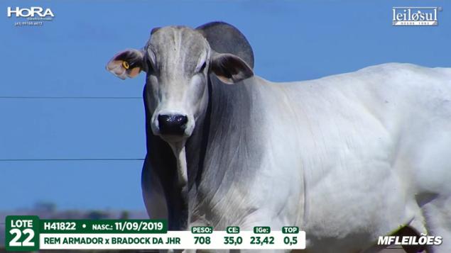LOTE 22 - H41822 - PESO: 708 KG - CE 35 CM TOP 0,5% - NASC: 11/09/2019