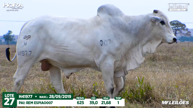 LOTE 27 - H41977 - PESO: 625 KG - CE 39 CM TOP 1% - NASC: 28/09/2019