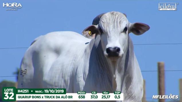 LOTE 32 - H4251  - PESO: 658 KG - CE 37 CM TOP 0,5% - NASC: 19/10/2019