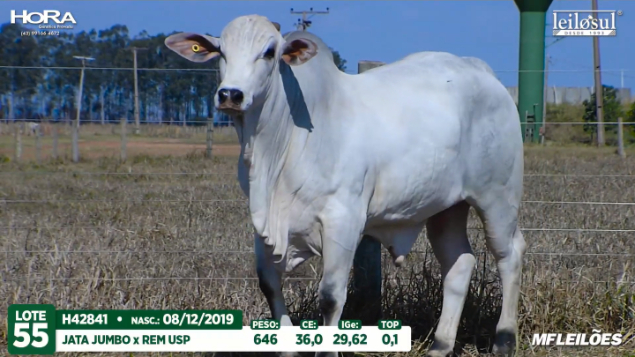 LOTE 55 - H42841 - PESO: 646 KG - CE 36 CM TOP 0,1% - NASC: 08/12/2019