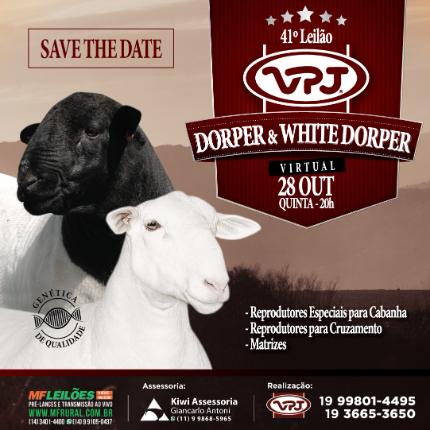 EM BREVE - 41º LEILÃO VPJ DORPER & WHITE DORPER