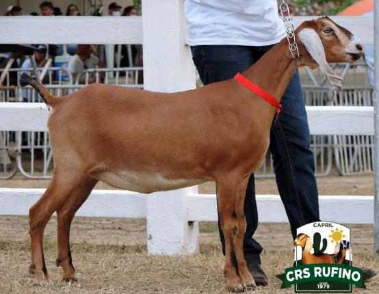 LOTE 009 - LARISSA DO CAPRIL CRS RUFINO - 1823721002