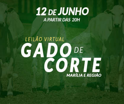 LEILÃO VIRTUAL GADO DE CORTE