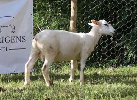 LOTE 16 - AGROTEXEL DODGE 168