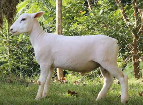 LOTE 19 - AGROTEXEL DOM 177