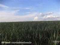 Fazendas com CANA
