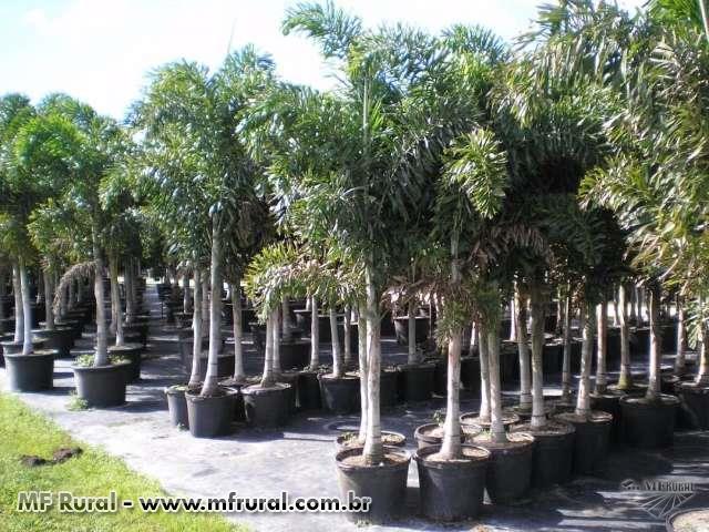 Árvores Nativas Para Paisagismo e Reflorestamento