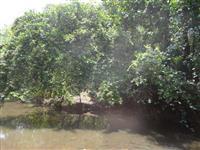 Fazenda em Pedro Afonso-TO com 566 hectares