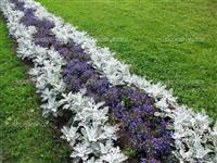 plantas para paisagismo